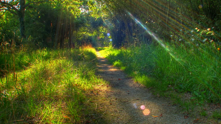 Sunset beams through trees on forest path, HD motorized time lapse clip, high