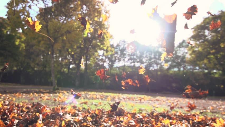 autumn leaves falling in slow motion. colorful fall season. 1920x1080 hd   Shutterstock Video #5000075