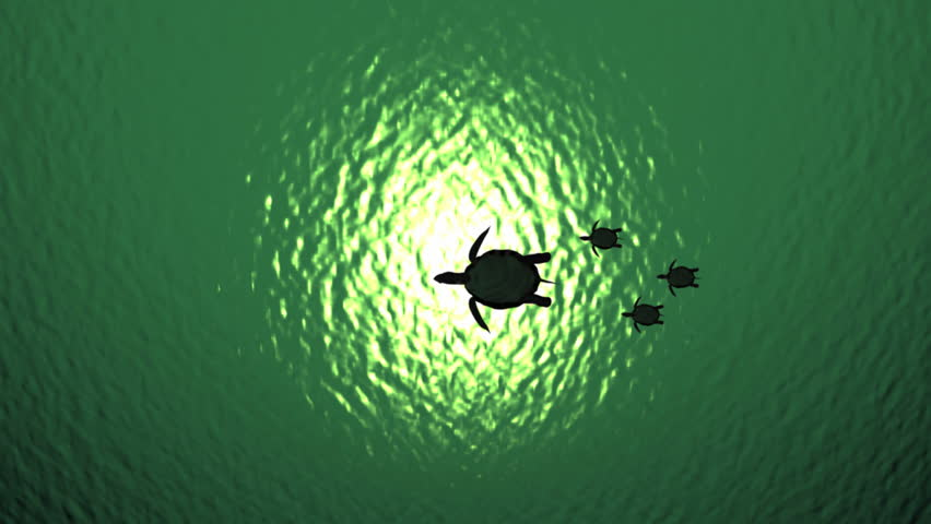 Baby Sea Turtle Stock Footage Video Shutterstock
