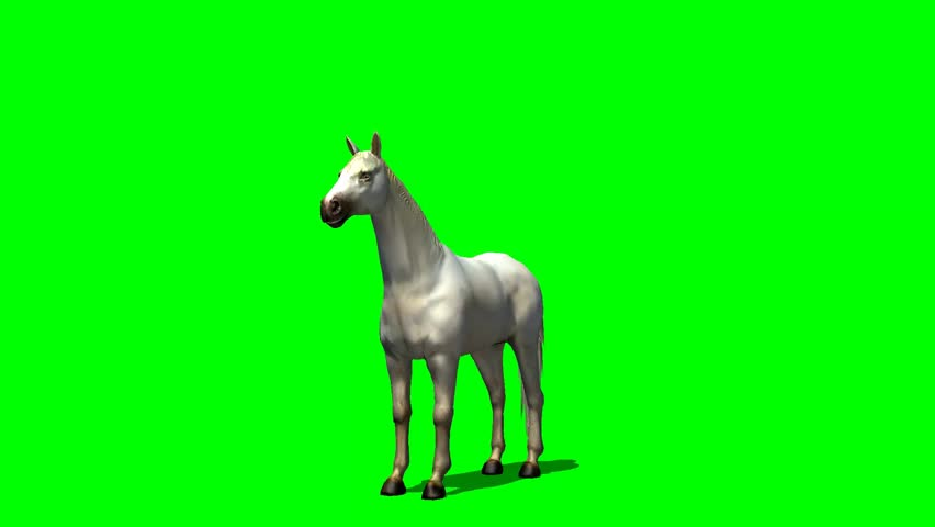 white horse rise animal green screen video footage