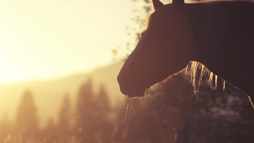Horse Close-Up at sunset, 240fps | Shutterstock HD Video #5323316