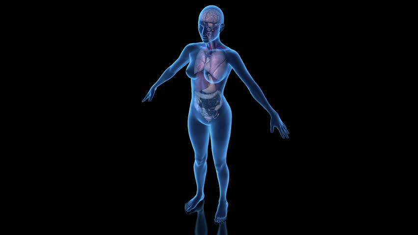 Continuous loop rotation of female anatomy model | Shutterstock HD Video #5368514