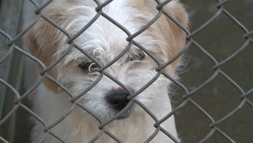 Sad Crying Puppy Dog Eyes In Shelter Behind Fence