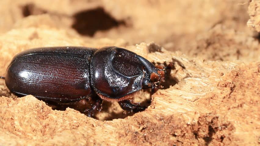 Header of Beetle