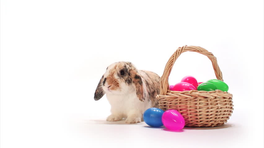 Bunny: Easter Bunny Sits With Basket And Hops Off | Shutterstock Video #5856272