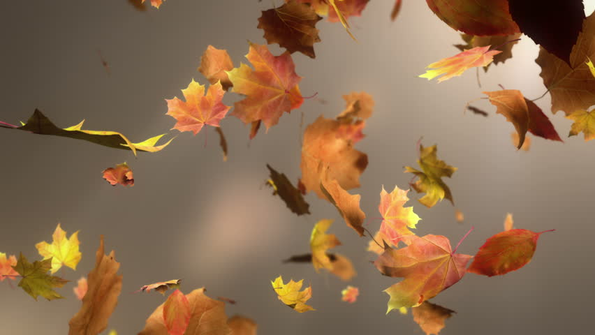 Falling leaves Loopable Background. High quality animated background of falling leaves. Animation is loopable.