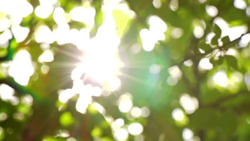 Sunlight Solar Power through leaves and branches of a tree 1 | Shutterstock HD Video #6417431