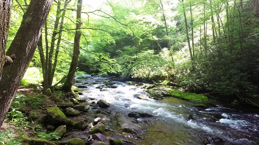 Winding Forest Path & Stream 1
