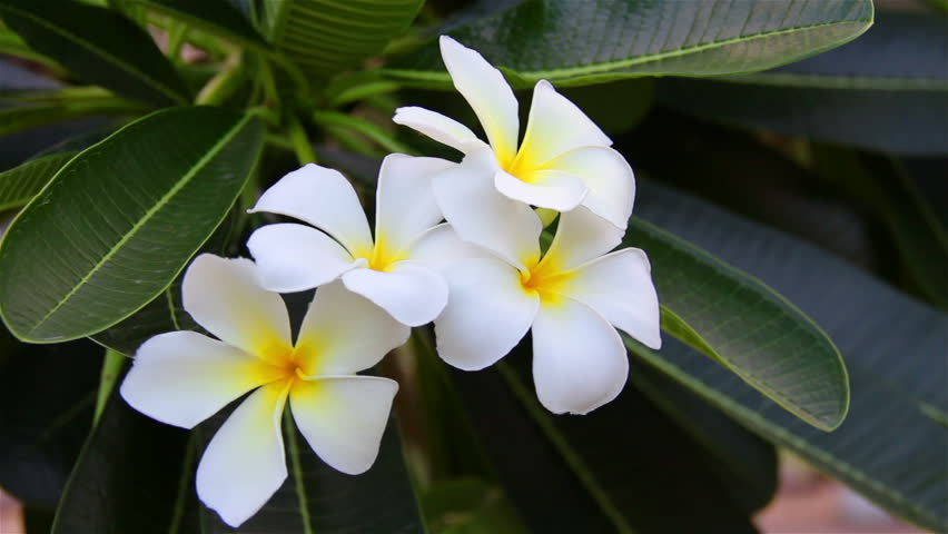 Header of Aloha