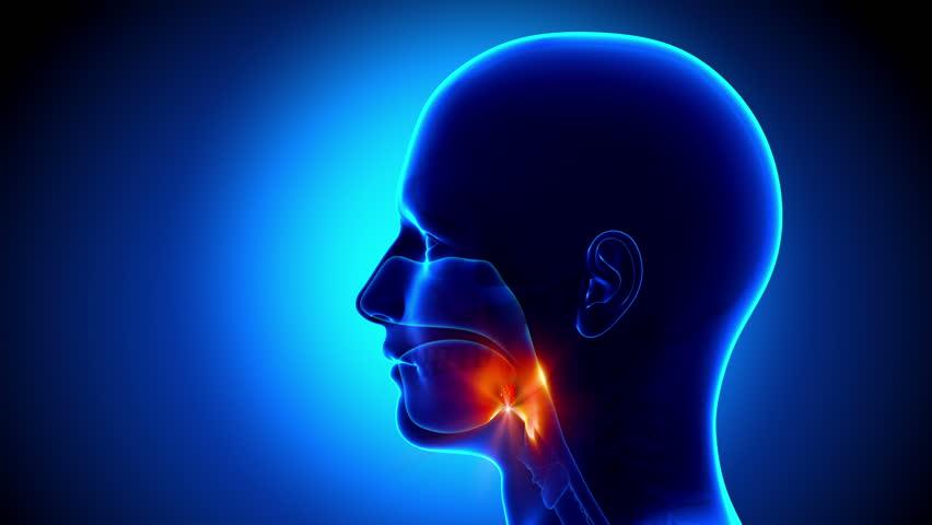 Header of tonsils