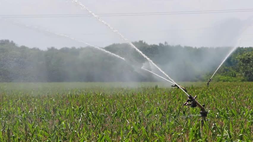 Agricultural Irrigation Parts : Crop irrigation using the rain gun sprinkler system
