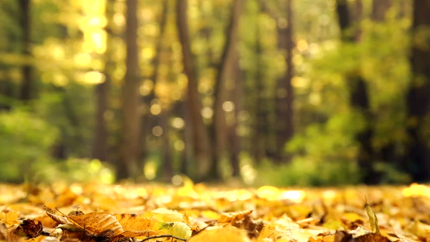 Image result for autumn in the woods
