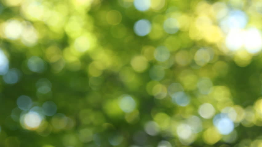 Natural Green Motion Background (seamless Loop) Stock ...