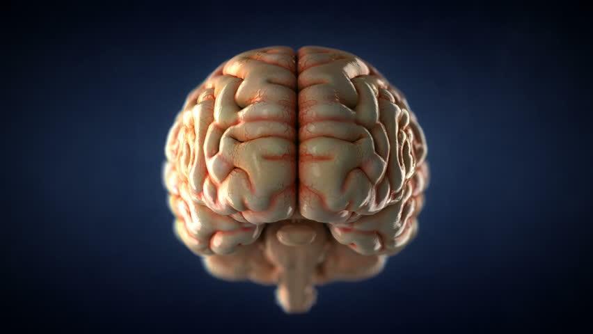 Animated human brain - photo#49