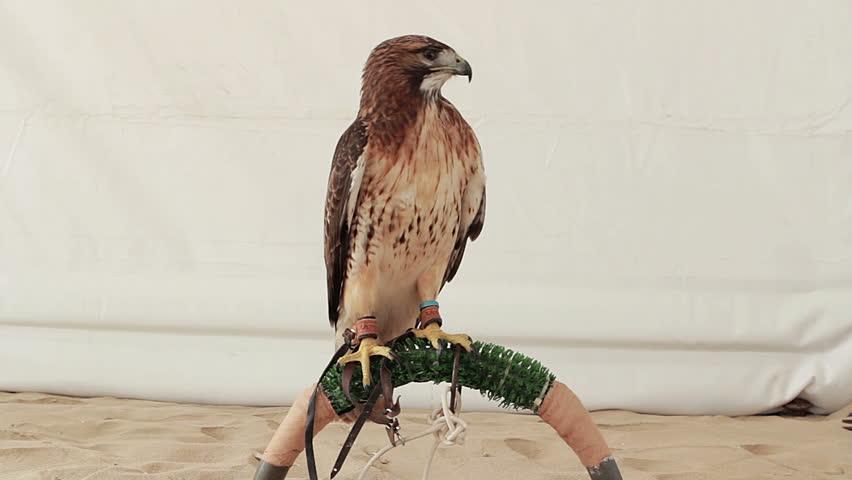 Header of perch