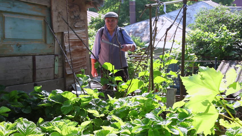 Farmer Spraying Pesticides In The Vegetable Garden Gardening