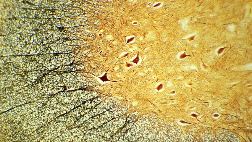 Microscopic Section Footage Stock Clips
