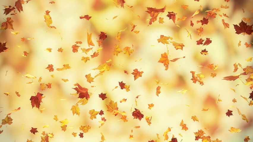 utumn falling leaves - loopable 3d backgrounds