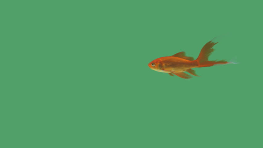 Screen saver stock footage video shutterstock for Swimming fish screensaver