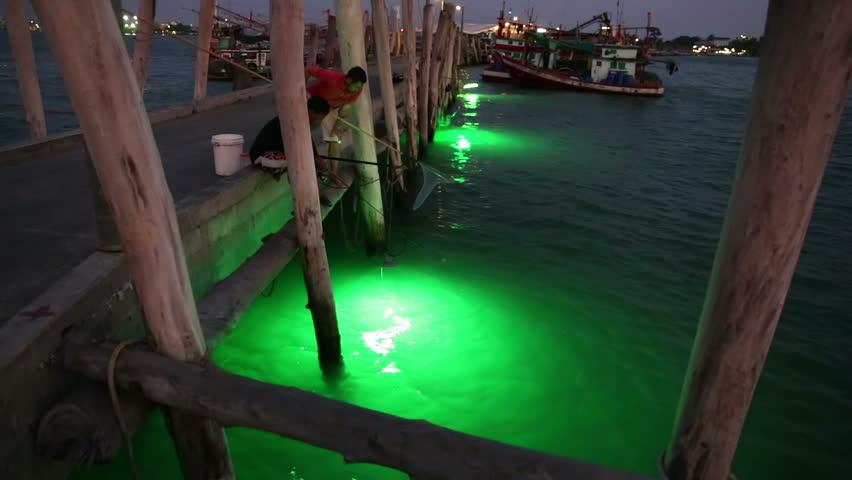phytoplankton stock footage video - shutterstock, Reel Combo