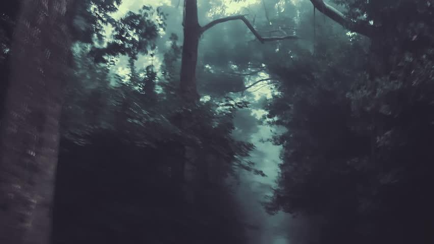 Long camera track through a dark forest | Shutterstock HD Video #9861686